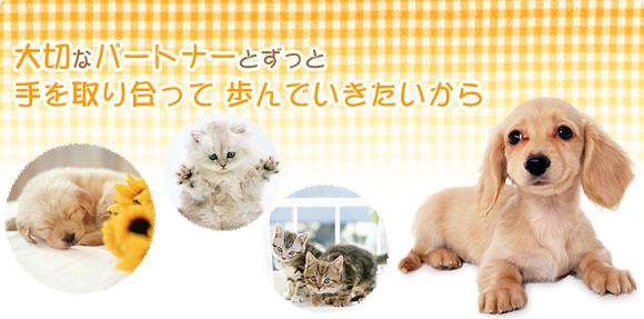 ホーム 動物病院 東広島市八本松町 犬 猫