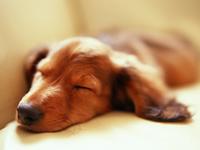 できるだけ多くの種別・症状に対応できる獣医を目指して・・・